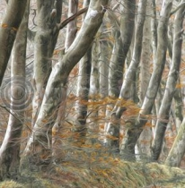 Beech Avenue Colour Art Greetings Card (LY)