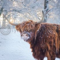 Winter Highland Cow in Snow Colour Art Greetings Card
