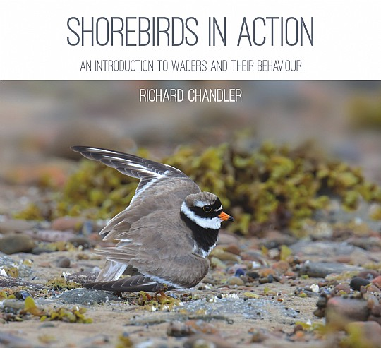 Shorebirds in Action (Jul)