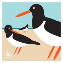 I Like Birds: Oyster Catcher Notecards