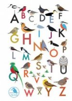 I Like Birds: Alphabet of Birds Address Book