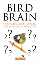Bird Brain Quiz Book