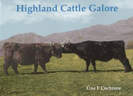 Highland Cattle Galore