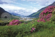 Loch Etive & Rhododendrons Postcard (HA6)