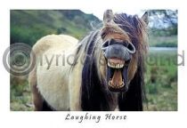 Laughing Horse Postcard (HA6)