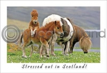 Stressed Out In Scotland Postcard (HA6)
