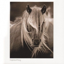 Highland Pony Sepia Greetings Card (LY)