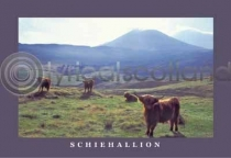 Schiehallion & Highland Cattle Postcard (HA6C)