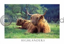 Highlanders in Glen Nevis Postcard (HA6)