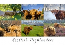 Scottish Highlanders Composite Postcard (HA6)