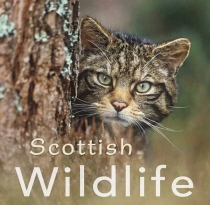 Scottish Wildlife Gift Book