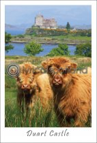 Two Calves at Duart Castle Postcard (V A6 LY)